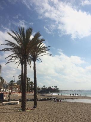 Benalmadena palmiers